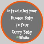Introducing Your Human Baby to Your Furry Baby
