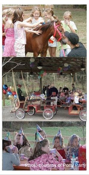 Animals Farms Photo Courtesy Of Pony Party