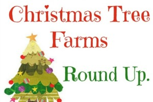 christmas tree round up