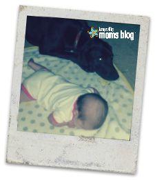 dog4blog