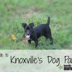 A Guide to Knoxville's Dog Parks