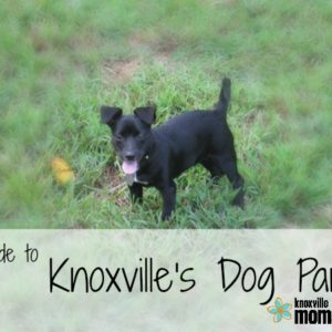 Knoxville Dog Parks