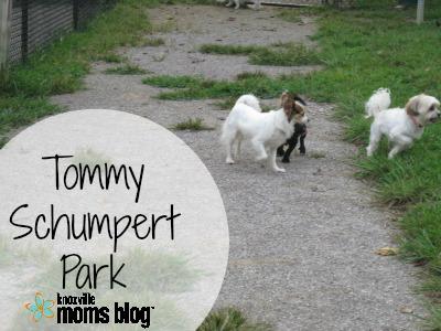 TommySchumpert