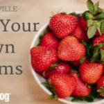 Knoxville's Pick-Your-Own Farms 2016