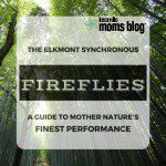 The Elkmont Synchronous Fireflies: A Guide to Mother Nature's Finest Performance {2017}