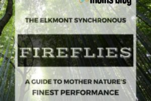 The Elkmont Synchronous Fireflies