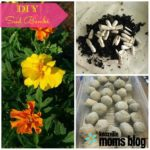 DIY Seed Bombs: Fun Craft for Kids