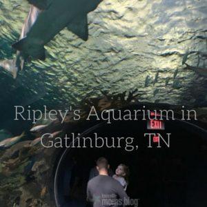 Ripley's Aquarium in Gatlinburg, TN