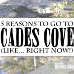 5 Reasons to Go to Cades Cove, Like… RIGHT NOW!