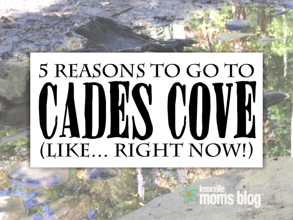 5 Reasons to Go to Cades Cove | Knoxville Mom's Blog