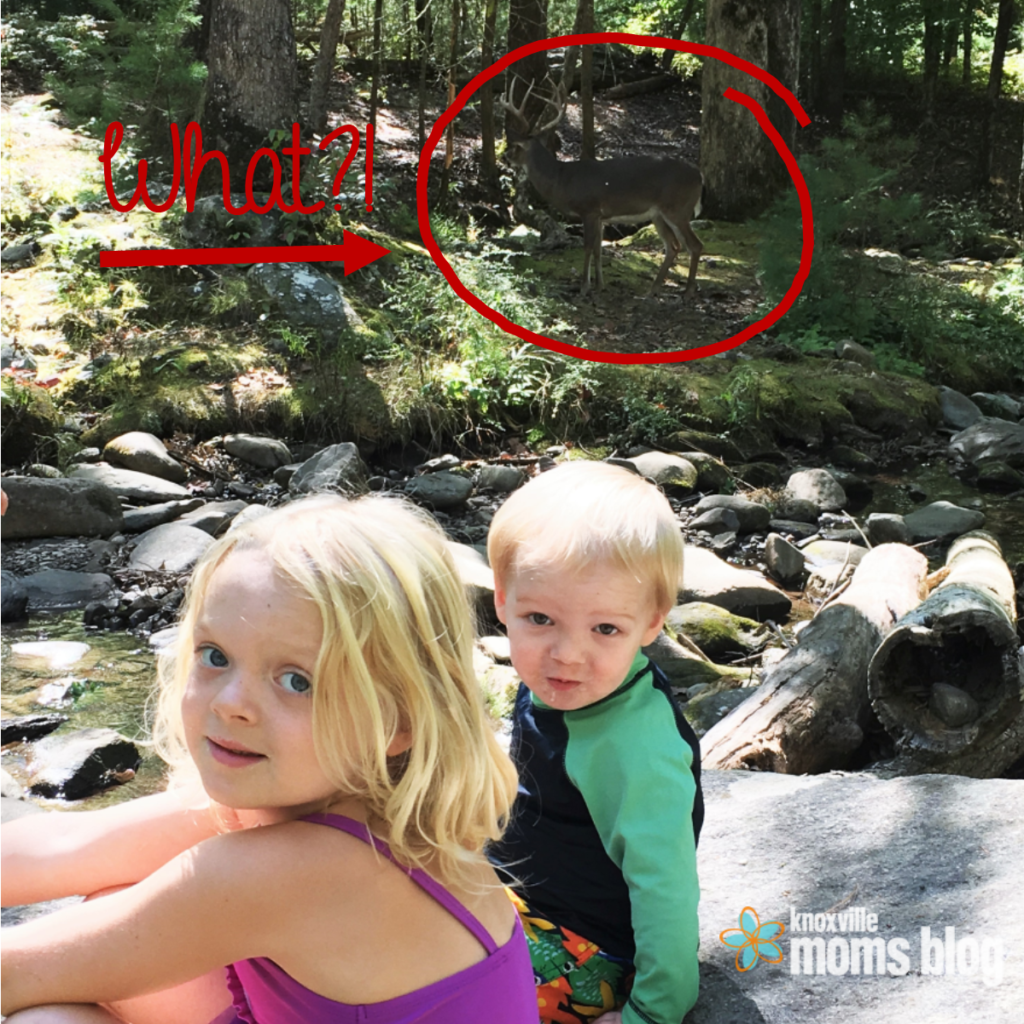 A Deer in Cades Cove | Knoxville Mom's Blog