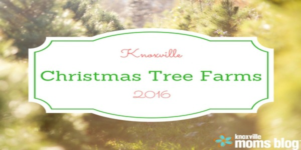Knoxville Christmas Tree Round Up