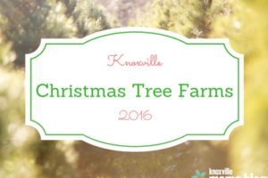 Knoxville Christmas Tree Farms 2016