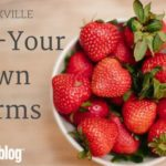 Knoxville's Pick-Your-Own Farms {2017}