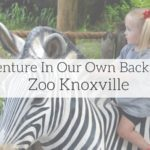 Adventure In Our Own Backyard: Zoo Knoxville