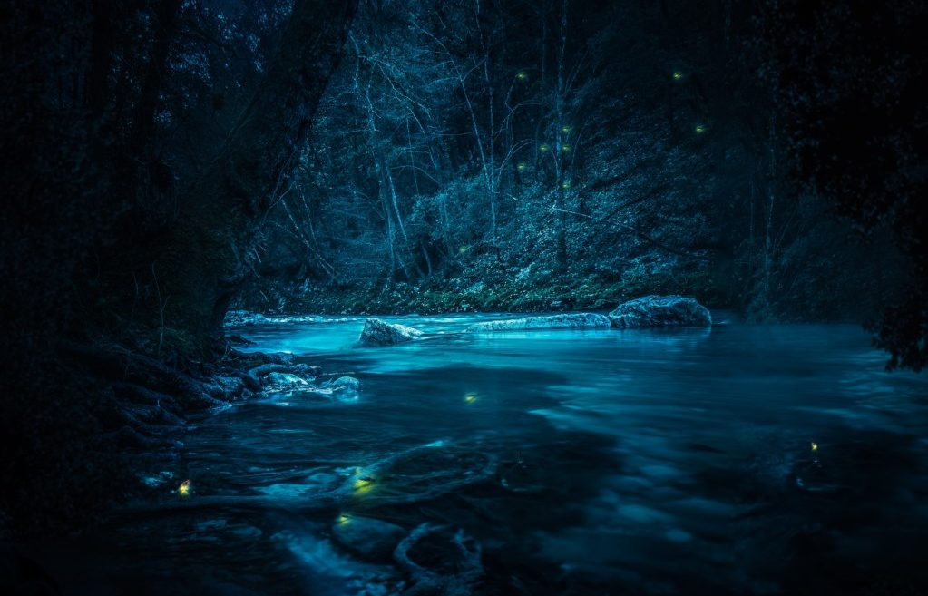 Elkmont Synchronous Fireflies