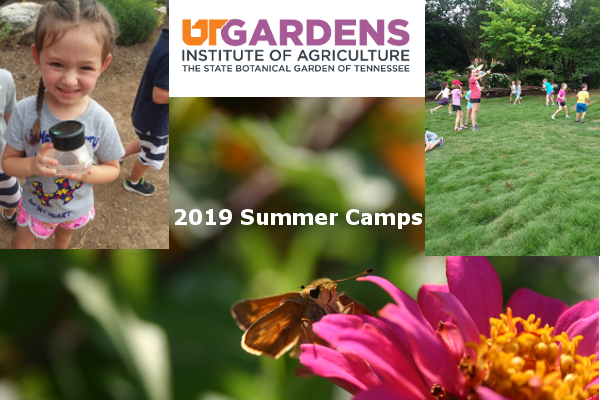 UT Gardens Summer Camp