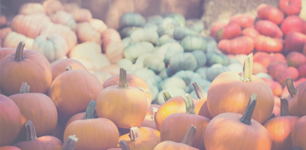 Knoxville Corn Mazes and Pumpkin Patches