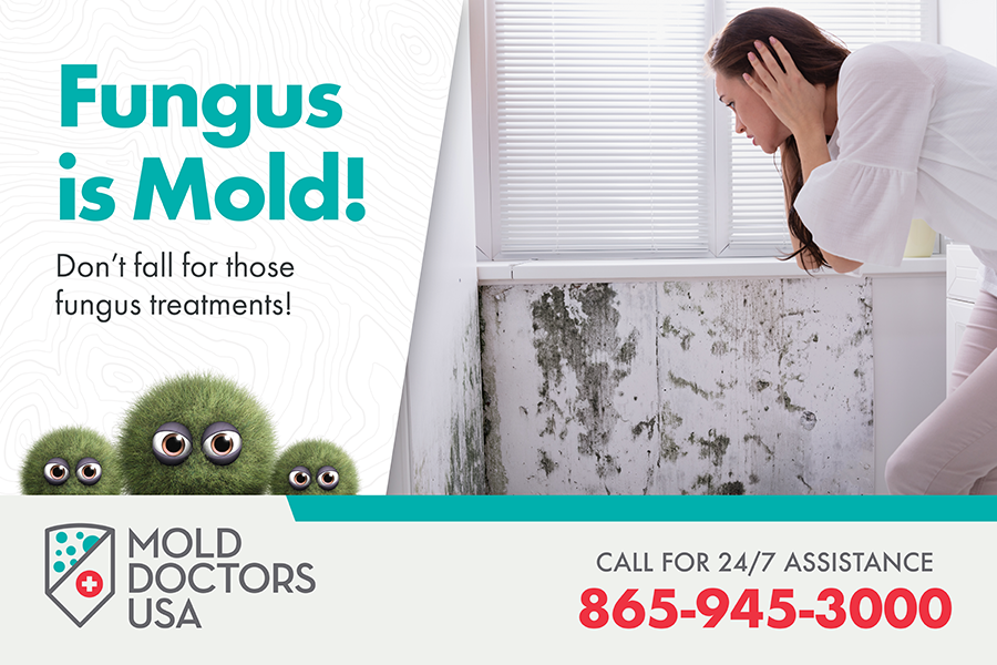 Mold Doctors USA