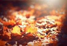 Knoxville Fall Fun Festivities and Events