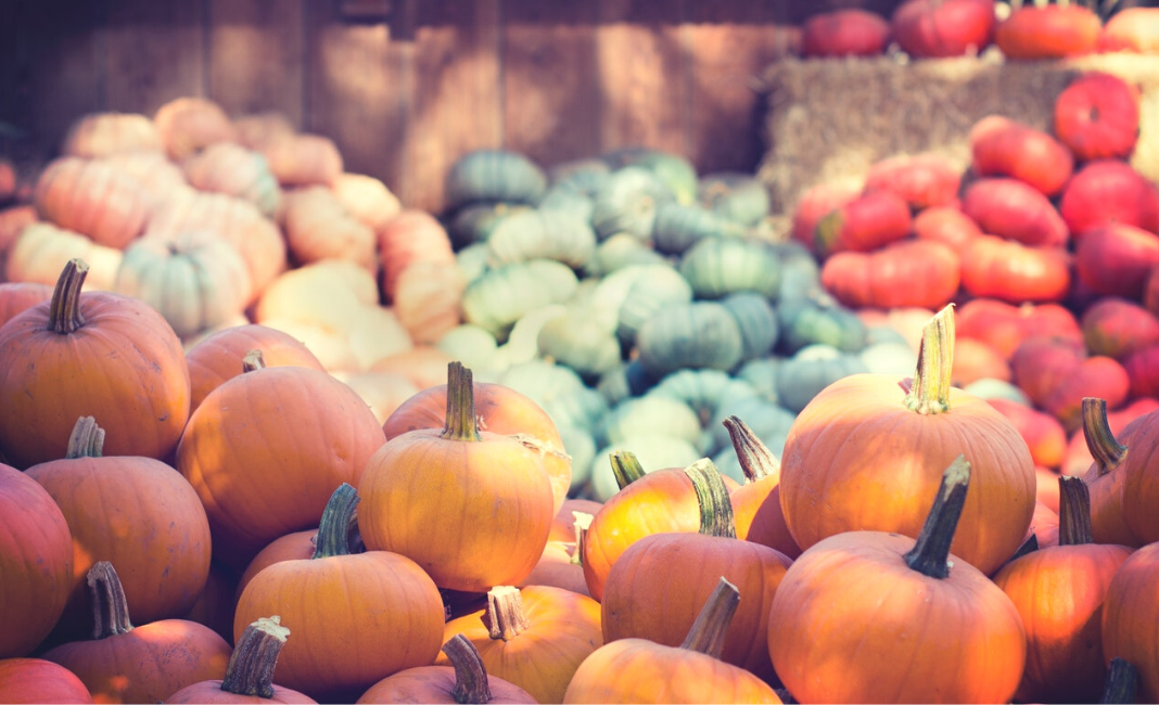 Knoxville Pumpkin Patches and Corn Mazes (1)