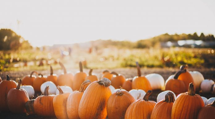 Knoxville Pumpkin Patches and Corn Mazes