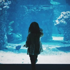 Aquariums to Visit in Driving Distance of Knoxville