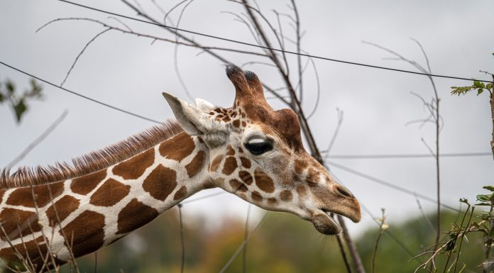 Where to See Animals in Knoxville Safaris, Zoos, and Farms