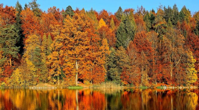 15+ Best Places to See Fall Leaves in Knoxville
