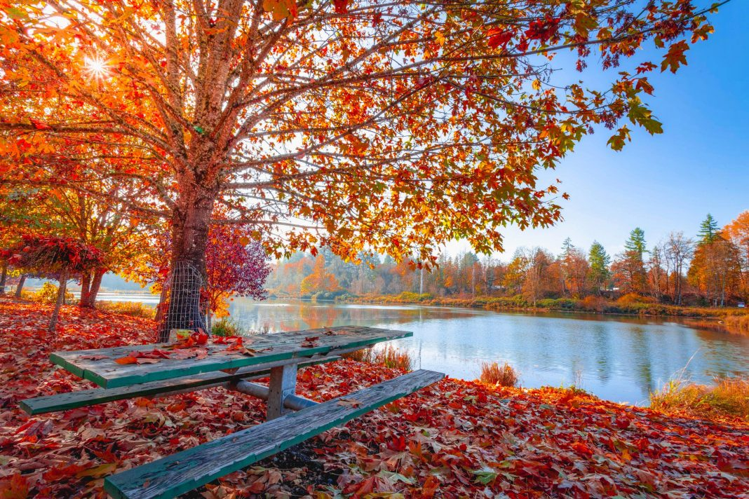 Fall Break Fun: Staycation Tips and Day Trips